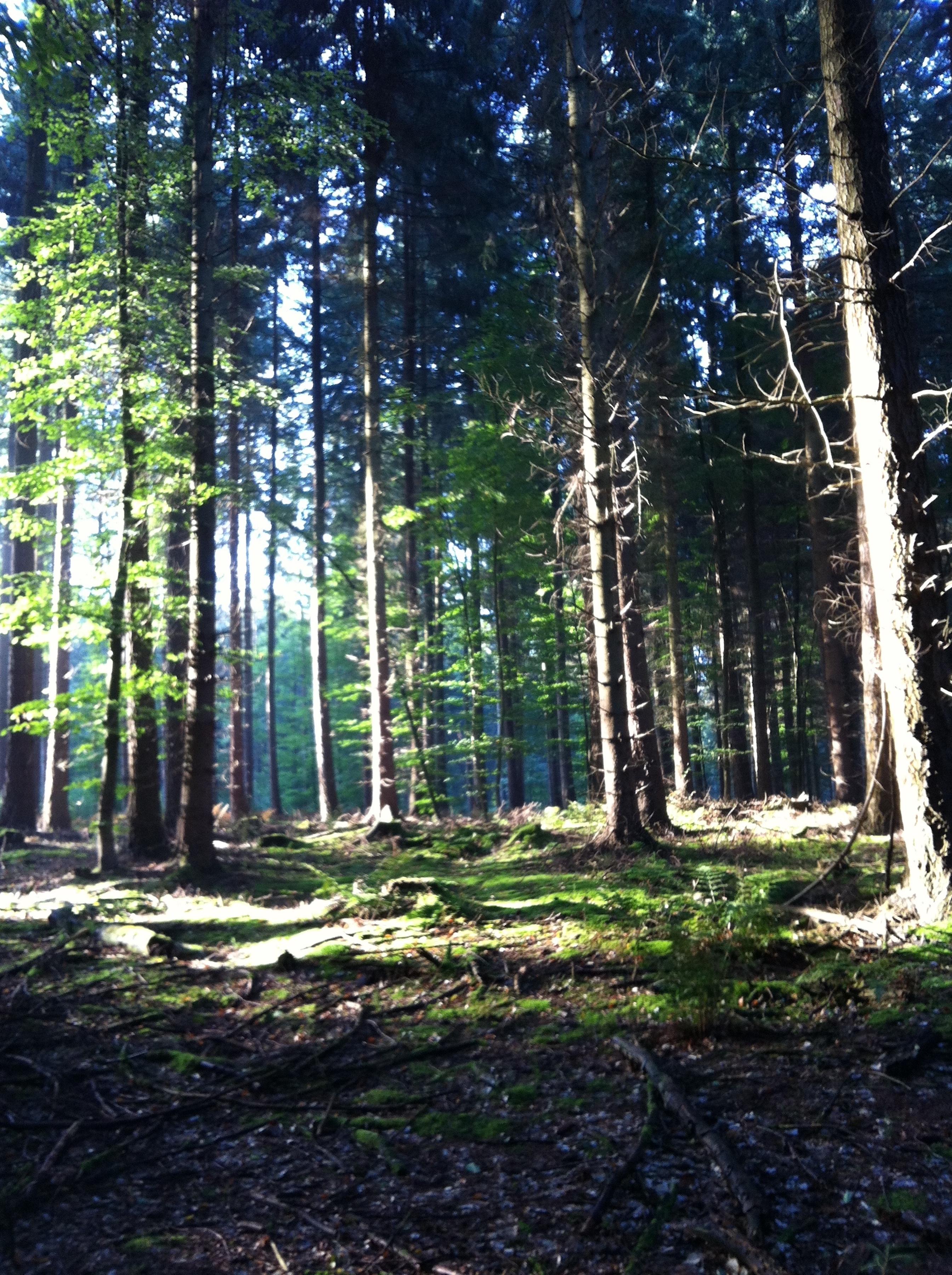 Natur im Wald beim schnurstracks Kletterwald