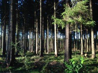 Nachhaltigkeit im Sachsenwald bei Hamburg